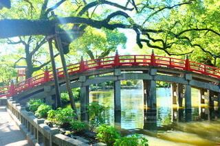 川に架かる橋の写真・画像素材[3763566]