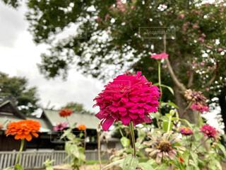 路上の花の写真・画像素材[3862519]