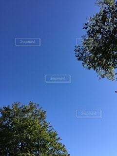 澄んだ青空と樹木の写真・画像素材[4754996]