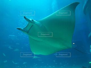 水族館の写真・画像素材[227382]