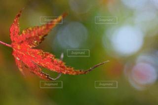 自然の写真・画像素材[215626]