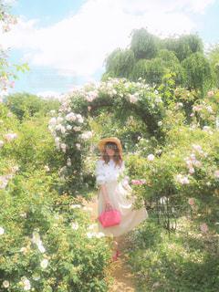 お花畑の写真・画像素材[514722]