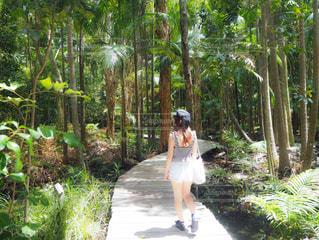 森の中のパスを歩く人の写真・画像素材[908275]
