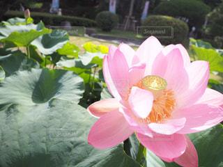 近くの花のアップの写真・画像素材[1284214]