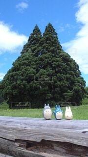 木のクローズアップの写真・画像素材[3760325]