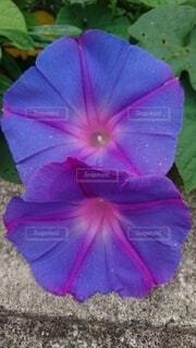 花のクローズアップの写真・画像素材[3763160]