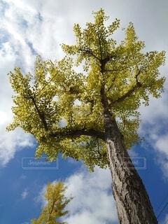 木のクローズアップの写真・画像素材[3772691]