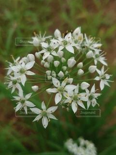 花のクローズアップの写真・画像素材[3776147]