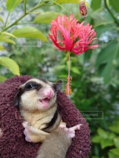 花のクローズアップの写真・画像素材[3777526]