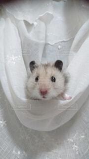 小動物のクローズアップの写真・画像素材[3779166]