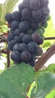 果物のクローズアップの写真・画像素材[3779175]