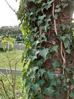 木のクローズアップの写真・画像素材[3799060]