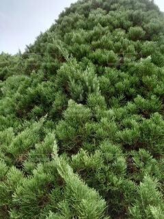 森の中の緑の植物の写真・画像素材[3799769]