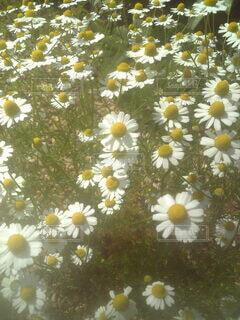 花のクローズアップの写真・画像素材[3809890]