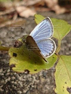 植物と昆虫のクローズアップの写真・画像素材[3835652]