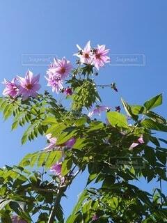 花のクローズアップの写真・画像素材[3883753]