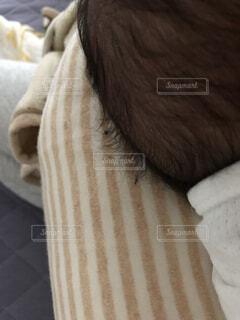 毛の塊の写真・画像素材[3777161]