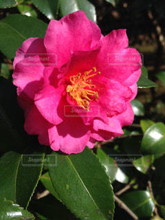 花の写真・画像素材[226429]