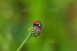 花に留まるてんとう虫の写真・画像素材[3764912]