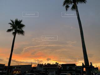夕焼けの前にヤシの木の写真・画像素材[3766281]