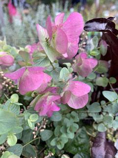 花のクローズアップの写真・画像素材[3839266]