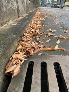 落ち葉と排水溝の写真・画像素材[3839324]