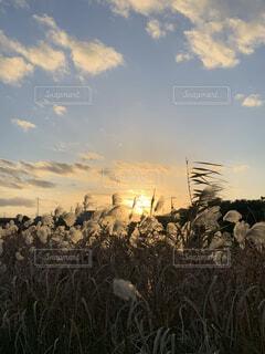 本日の夕暮れの写真・画像素材[3910266]