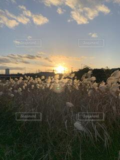 本日の夕暮れの写真・画像素材[3910269]