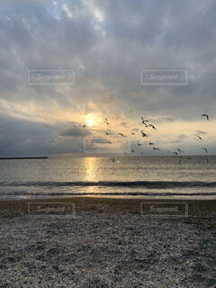 鳥達の飛ぶ海岸の写真・画像素材[3941208]