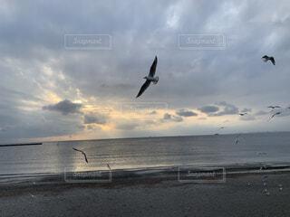 カモメ飛ぶ海岸の写真・画像素材[3941211]