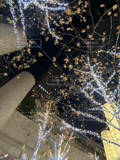 TOKYO TOKYOの写真・画像素材[3967512]