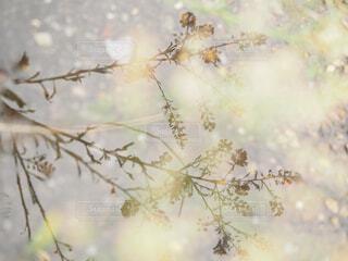 水溜りに映り込む植物の影の写真・画像素材[4521171]