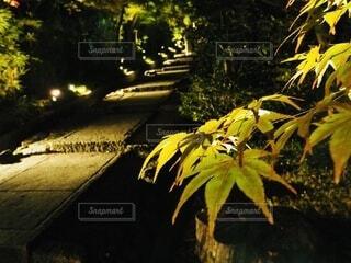 もみじの森林道の写真・画像素材[3892160]