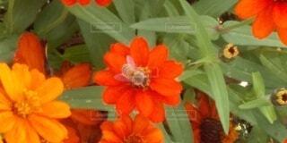 どっちの花の蜜がいいかなの写真・画像素材[3770568]