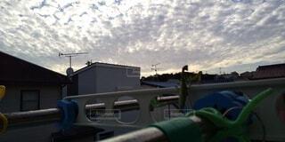 カマキリの懸垂の写真・画像素材[3803481]