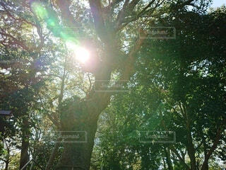 子宝安産の木の写真・画像素材[3836710]