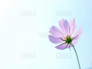 自然の写真・画像素材[234792]