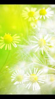 明るい花々の写真・画像素材[441626]