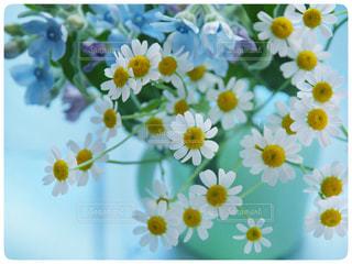 近くの花のアップの写真・画像素材[1008591]