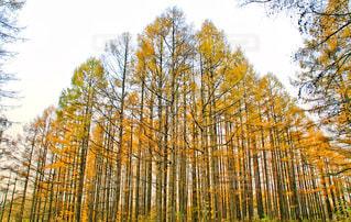 近くの木のアップ - No.1009640