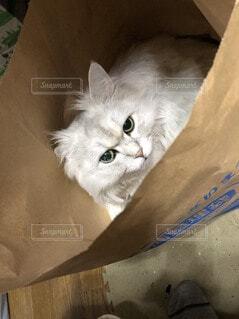 ベッドに横たわる猫の写真・画像素材[4206370]
