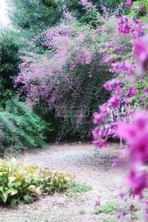 萩の花の写真・画像素材[3780401]