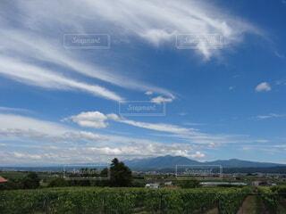 夏の空の写真・画像素材[3777644]