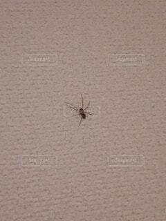 小さい蜘蛛の写真・画像素材[3779318]