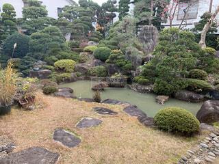 庭の植物の写真・画像素材[3782536]