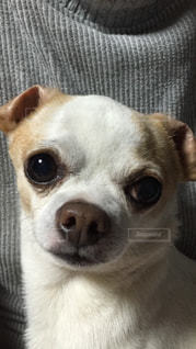 No.159636 犬