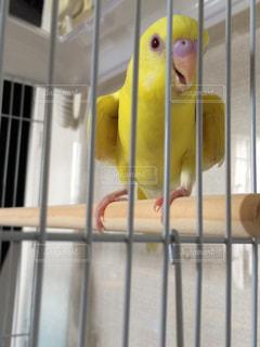 鳥 - No.177440