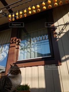 干し柿と猫のトラの写真・画像素材[3904672]