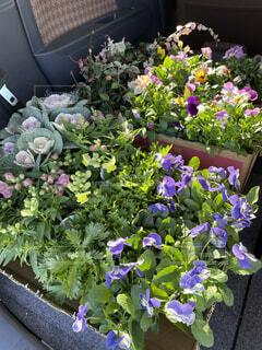 庭を彩ってくれる花たちの写真・画像素材[3908359]
