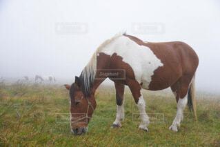 茶色の馬の写真・画像素材[3786830]